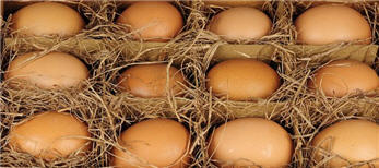 Eggs - Real Hand Blown Brown Eggs-