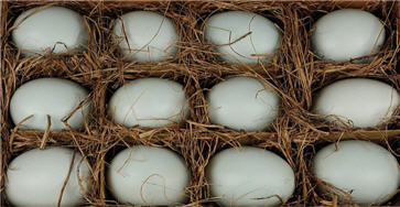 "Duck Eggs - Real Hand Blown 3""-"