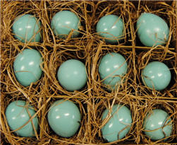 Quail Eggs - Robins Egg Blue Set/12-