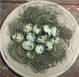 Quail Eggs - Green and Cream set/12