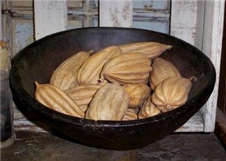 Jhinga Pods - Creamy Brown-dozen. jhinga, brown