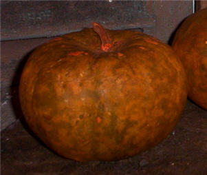 Pumpkin Apple Gourds - Large and  Jumbo-