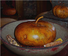 Pumpkin Gourds-pumpkin, gourd, fall