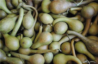 Spring Green Dipper Gourds-