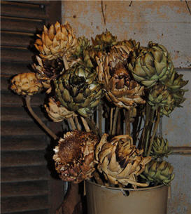 Artichokes On Stems