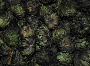 Artichokes - Dark Green