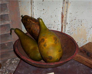 Papaya Gourds - Olive Green - Asst. Sizes